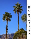 fan palms trees palm springs...   Shutterstock . vector #90531085