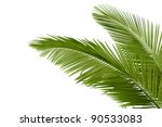 leaves of palm tree  isolated... | Shutterstock . vector #90533083