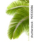 leaves of palm tree  isolated... | Shutterstock . vector #90533086