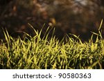 fresh grasses with background | Shutterstock . vector #90580363