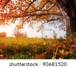 big autumn oak with yellow...   Shutterstock . vector #90681520