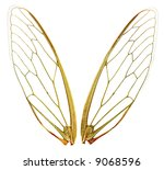 A Pair Of Cicada Wings  With...