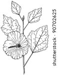 plant hibiscus syriacus  rose...   Shutterstock .eps vector #90702625