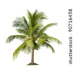 palm tree isolated on white... | Shutterstock . vector #90716458