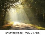 Sunlight Falls On A Forest Roa...