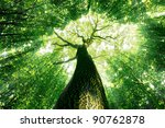 forest trees. nature green wood ... | Shutterstock . vector #90762878