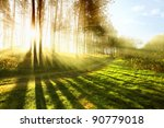Sunny Forest Early In The...