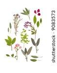 abstract arrangement of pressed ... | Shutterstock . vector #9083573