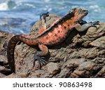 Galapagos Marine Iguana ...
