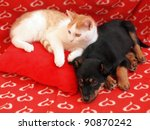 Stock photo two friends dog and cat in the red home 90870242