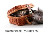 Kittens play in basket - stock photo