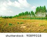 the plantation of eucalyptus... | Shutterstock . vector #90899318
