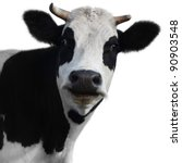 Funny Cow Isolated On A White...
