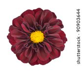 Red Dahlia Flower with Yellow Center Isolated on White Background - stock photo
