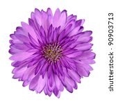 Cornflower Like Pink And Purpl...