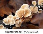 Details Of Mushroom In Forest
