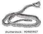 Reptile  Rattlesnake Skeleton ...