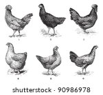 hens  1. houdan chicken. 2. hen ... | Shutterstock .eps vector #90986978