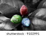 Three young buds tinted in red green blue colours - stock photo