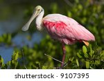 Small photo of Roseate Spoonbill (Ajaia ajaja) perched in the Mangroves, Merritt Island National Wildlife Refuge, Florida