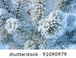 Winter Background. A Coniferou...