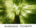 Nature. tree in the forest with ...