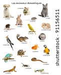 collage of pets and animals in... | Shutterstock . vector #91156511