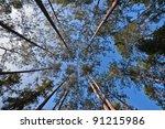 pine tree | Shutterstock . vector #91215986