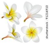 Stock vector frangipani plumeria hawaii bali indonesia shri lanka tropical necklace flowers vector 91216910