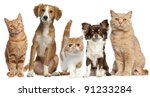 Stock photo group of cats and dogs in front of white background 91233284