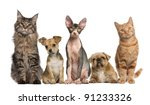 Stock photo group of cats and dogs in front of white background 91233326
