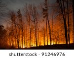 forest fire burning at night | Shutterstock . vector #91246976