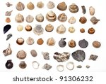 set of different sea shells on...   Shutterstock . vector #91306232