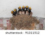 Swallow Nest With Six Hungry...