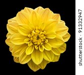 Yellow Flower Isolated On Blac...