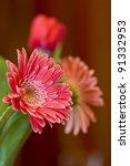 Close-up of gerbera in beautiful bouquet - stock photo