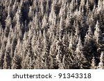 frozen forest texture - stock photo