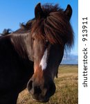 close up of horse | Shutterstock . vector #913911