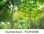 Jungle Rainforest Atmosphere...