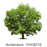 big tree   oak isolated on a... | Shutterstock . vector #91418723