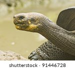 Profile Of A Galapagos Tortois...
