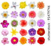 Stock photo set of colorful seasonal blooms 91479746