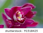 close up orchids. | Shutterstock . vector #91518425