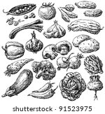 vegetables | Shutterstock . vector #91523975