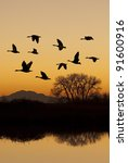 Silhouette Of Canadian Geese I...