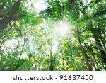 sunshine in the wood with green ... | Shutterstock . vector #91637450