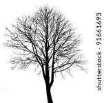 black tree silhouette isolated... | Shutterstock . vector #91661693