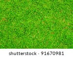 green grasses background   Shutterstock . vector #91670981