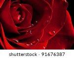 Red Rose Closeup With Drop
