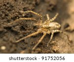 Small photo of Amaurobiidae